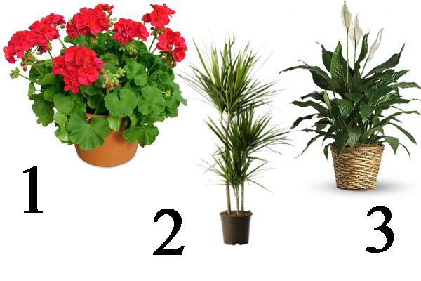 Какие цветы в спальне нужно держать