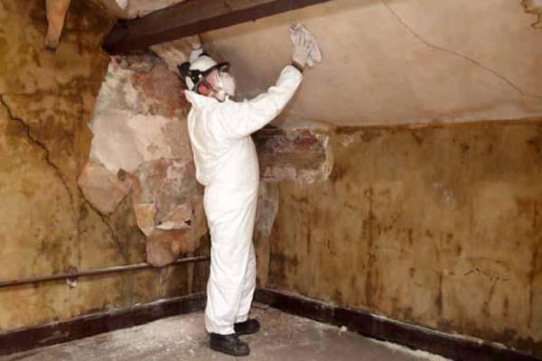 Как выводить грибок на стенах в квартире
